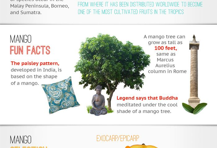 Mango benefits infographic